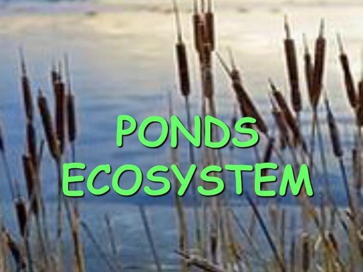PONDS ECOSYSTEM