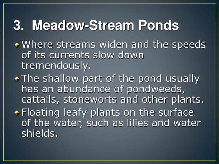 3.  Meadow-Stream Ponds