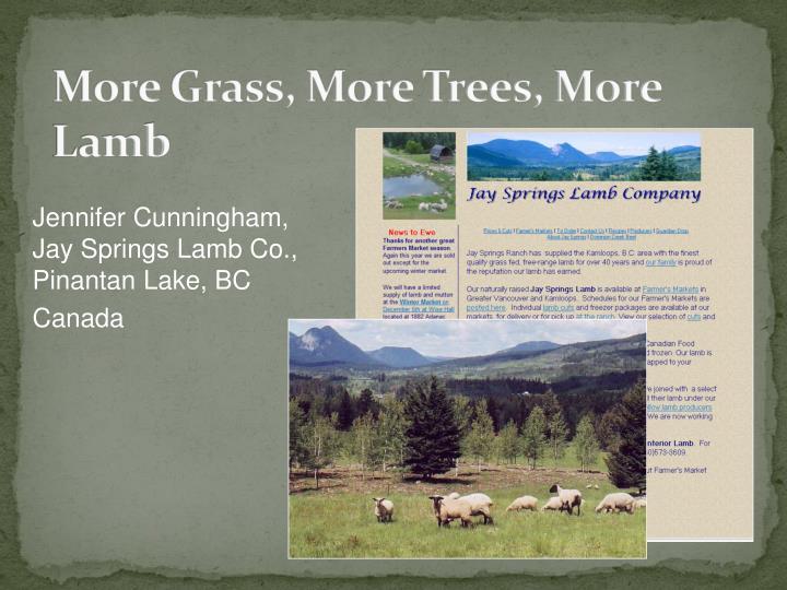 More grass more trees more lamb