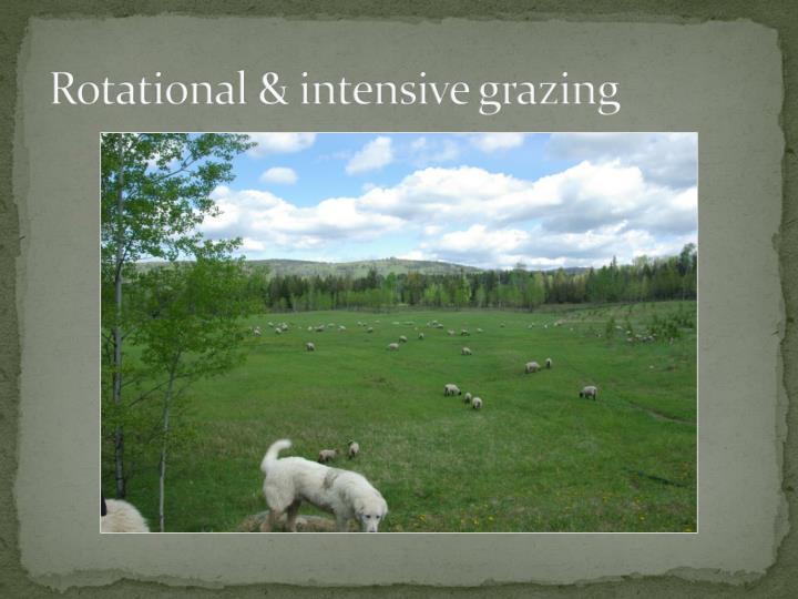 Rotational & intensive grazing