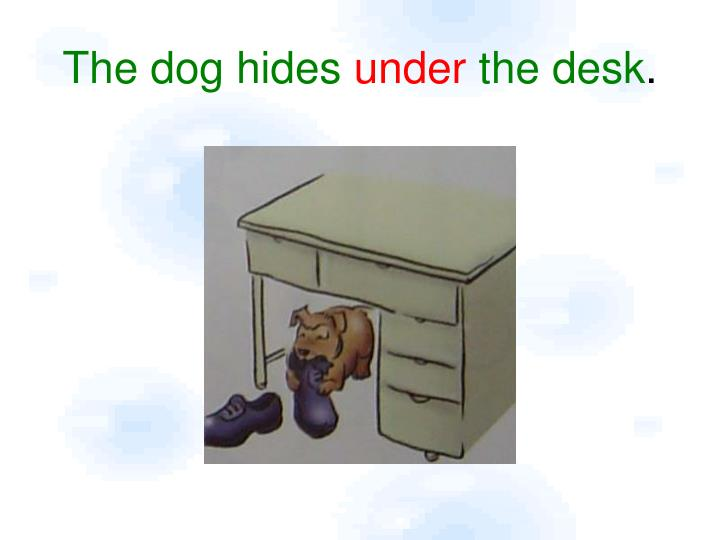 The dog hides