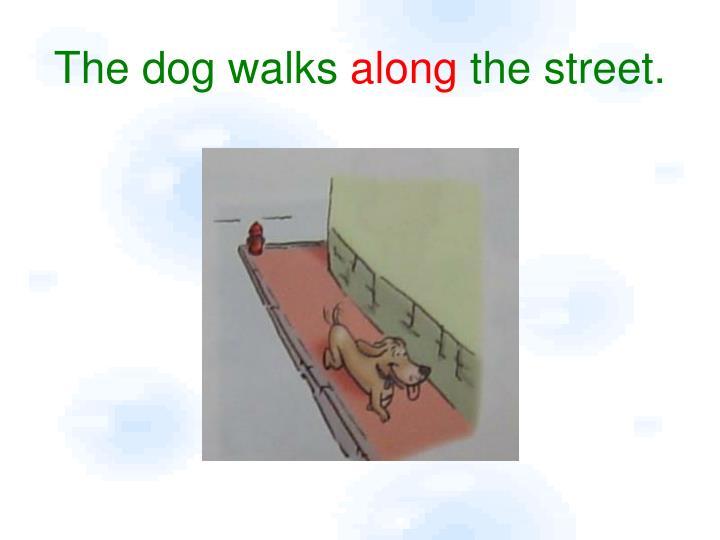 The dog walks