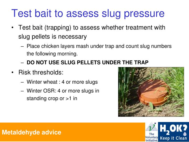 Test bait to assess slug pressure