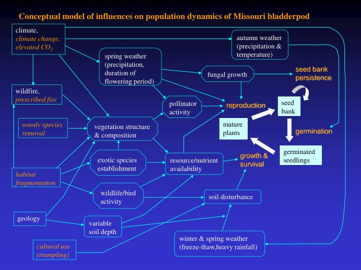 Conceptual model of influences on population dynamics of Missouri bladderpod