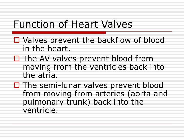 Function of Heart Valves