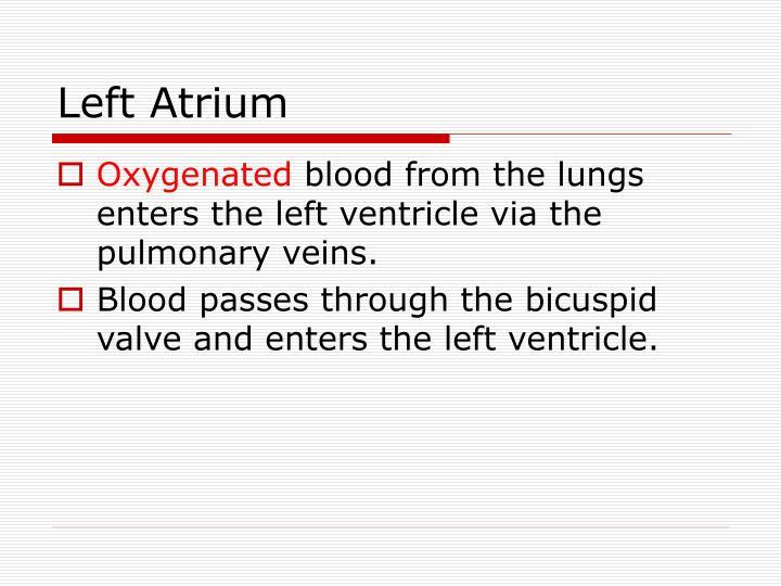 Left Atrium