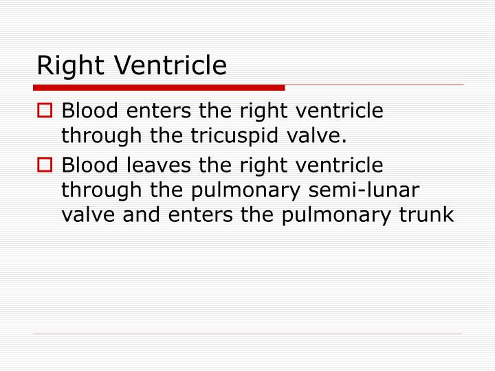 Right Ventricle