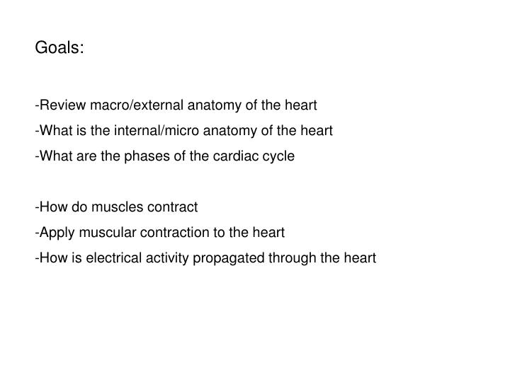 Ppt Goals Review Macroexternal Anatomy Of The Heart What Is The