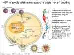 hiv lifecycle with more accurate depiction of budding1