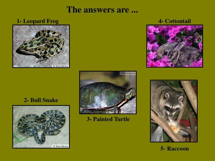1- Leopard Frog