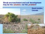 shrub encroachment and soil development may be the solution not the problem