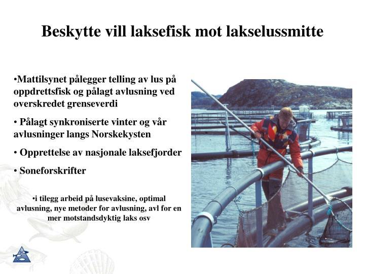 Beskytte vill laksefisk mot lakselussmitte