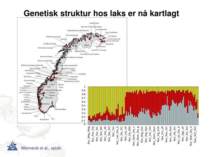 Genetisk struktur hos laks er nå kartlagt