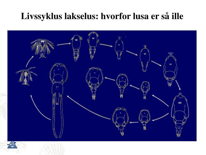 Livssyklus lakselus: hvorfor lusa er så ille