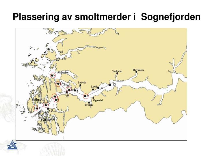 Plassering av smoltmerder i  Sognefjorden