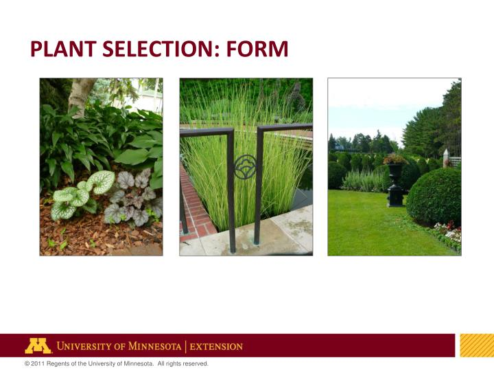 PLANT SELECTION: FORM