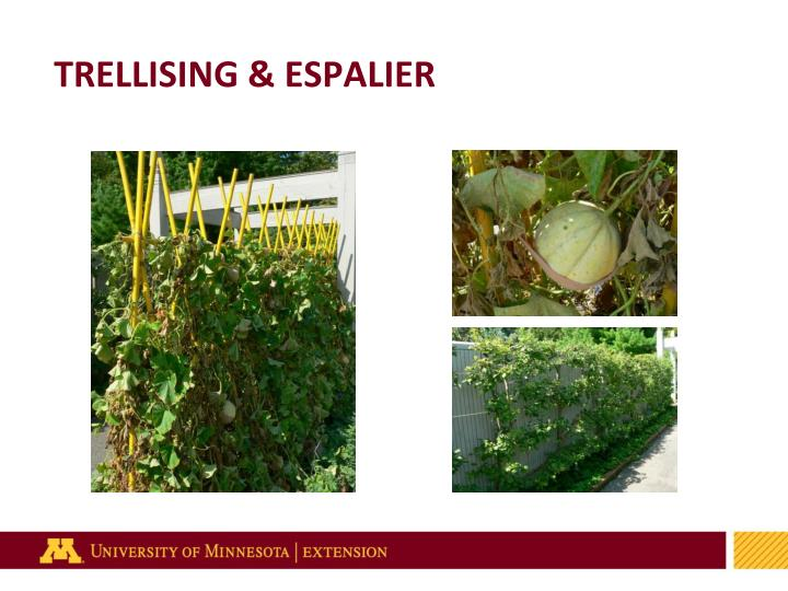 TRELLISING & ESPALIER
