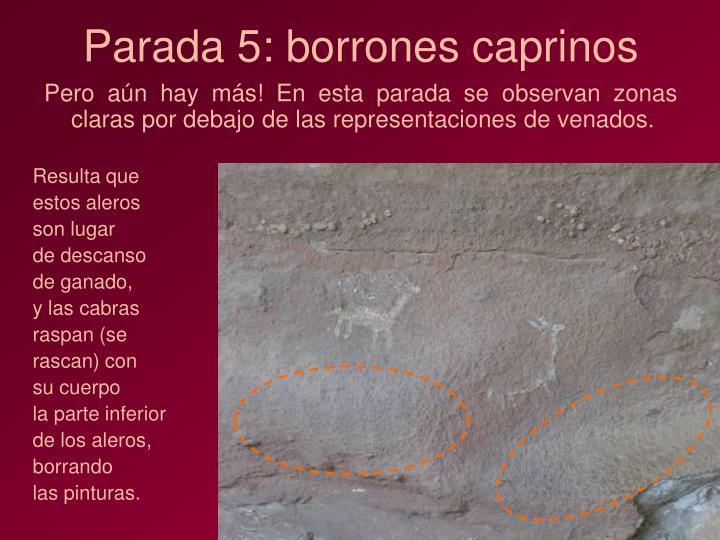 Parada 5: borrones caprinos