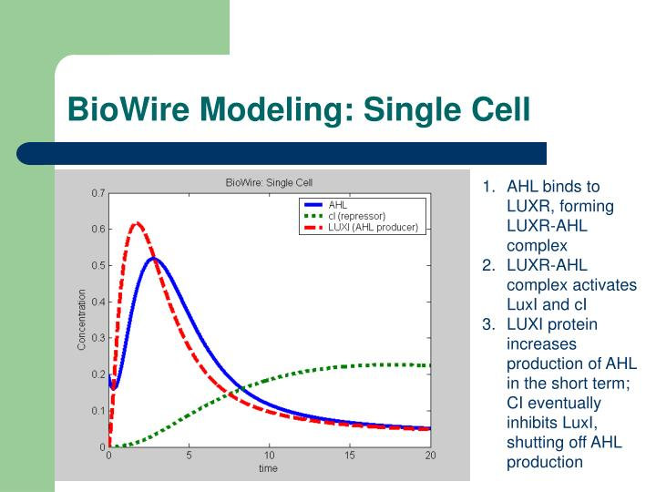 BioWire Modeling: Single Cell