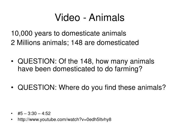 Video - Animals