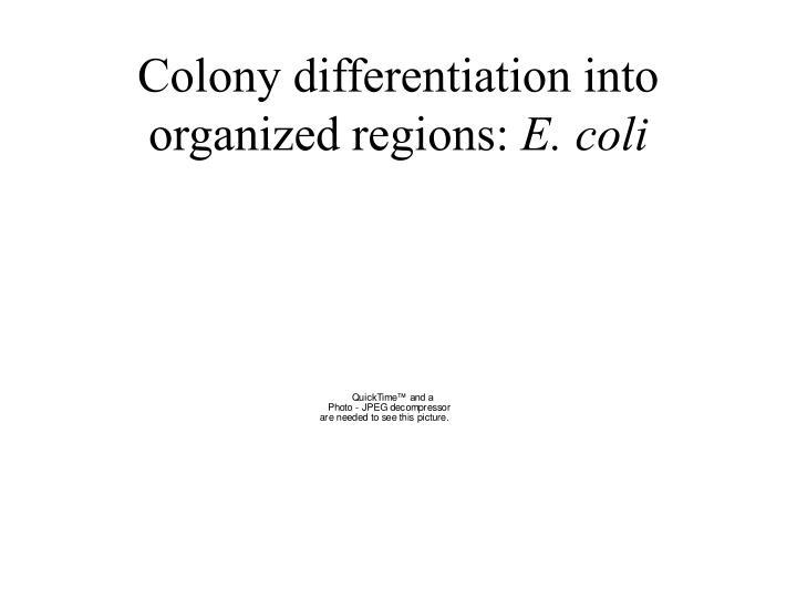 Colony differentiation into organized regions: