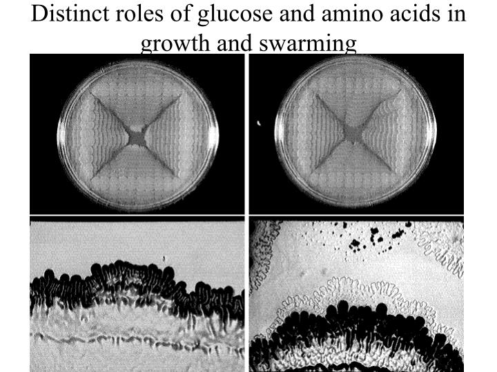 Distinct roles of glucose and amino acids in growth and swarming