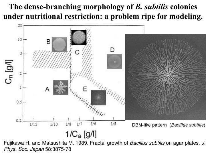 The dense-branching morphology of