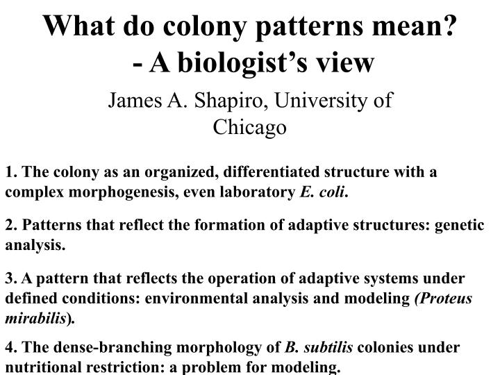 What do colony patterns mean a biologist s view
