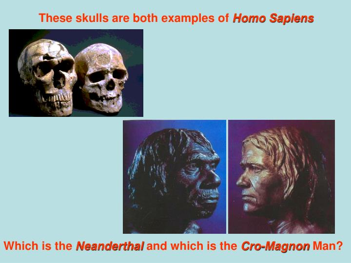 These skulls are both examples of