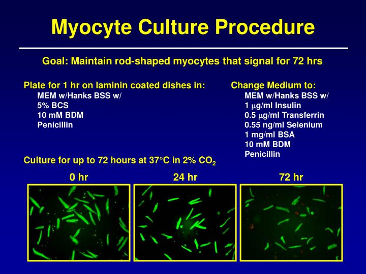 Myocyte Culture Procedure