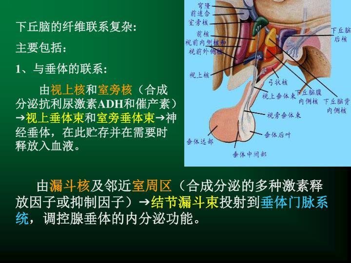 下丘脑的纤维联系复杂