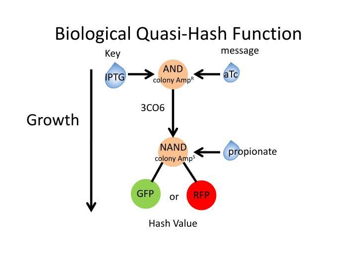 Biological Quasi-Hash Function