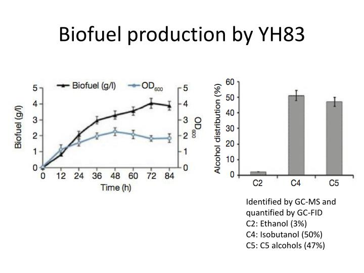 Biofuel production by YH83