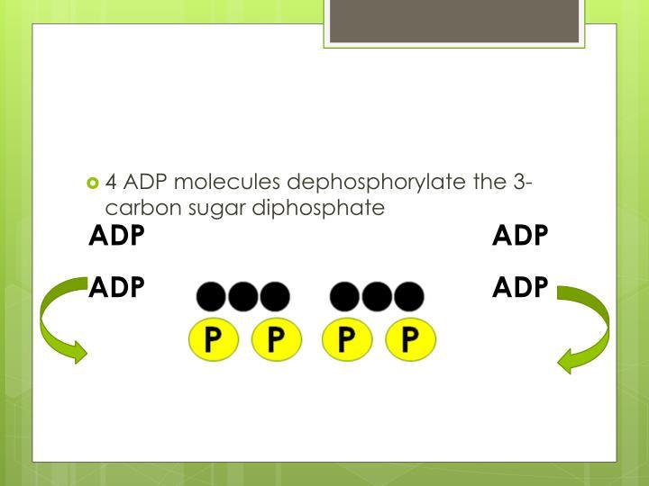 4 ADP molecules dephosphorylate the 3-carbon sugar diphosphate