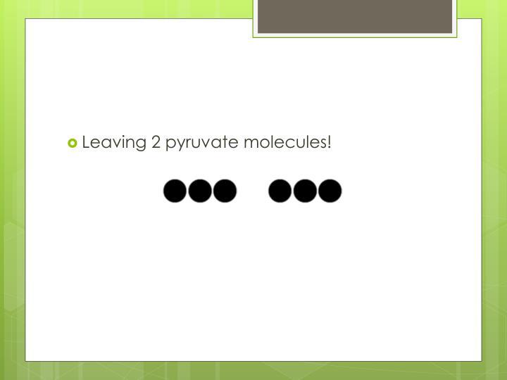Leaving 2 pyruvate molecules!