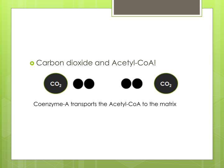 Carbon dioxide and Acetyl-CoA!