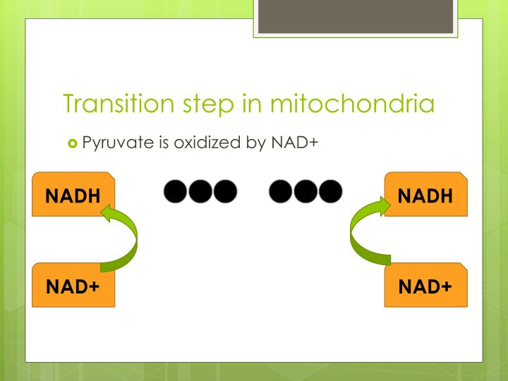 Transition step in mitochondria