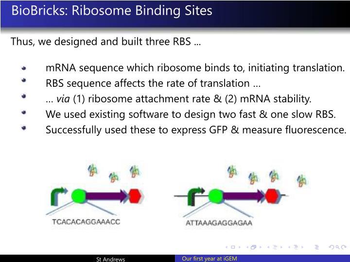 BioBricks: Ribosome Binding Sites