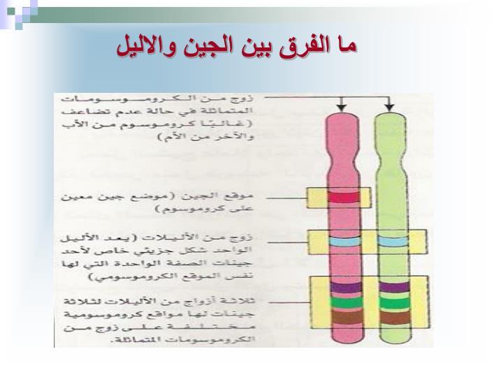 ما الفرق بين الجين والاليل