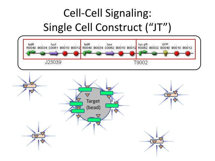 Cell cell signaling single cell construct jt