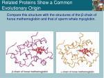 related proteins show a common evolutionary origin3