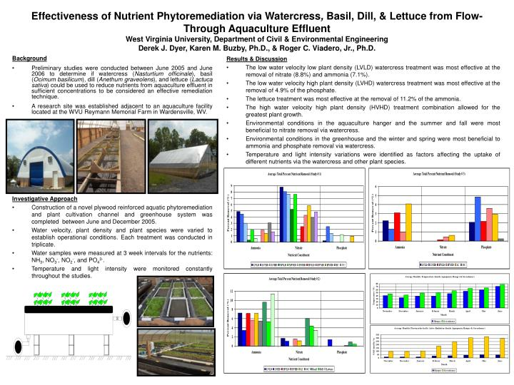 Effectiveness of Nutrient Phytoremediation via Watercress
