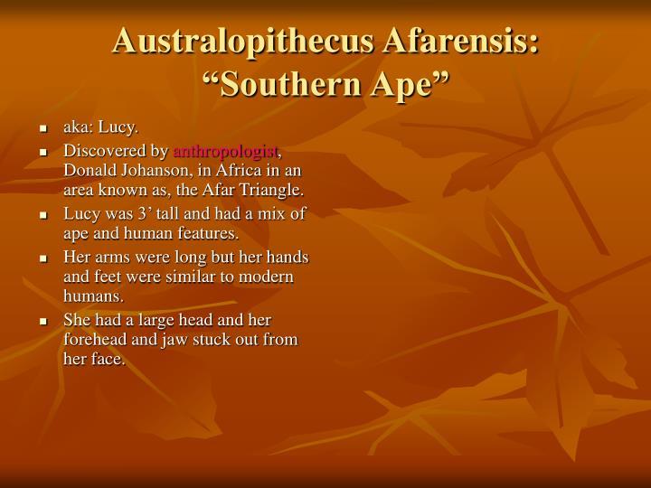 Australopithecus afarensis southern ape