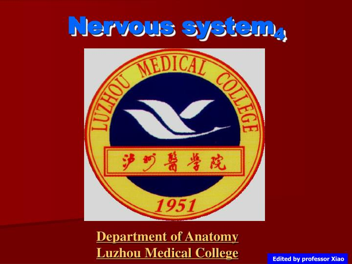 PPT - Nervous system 4 PowerPoint Presentation - ID:4231297