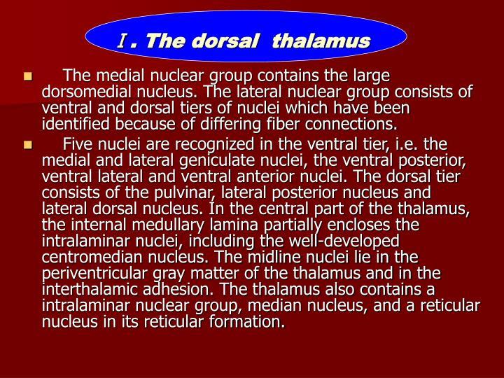 Ⅰ. The dorsal  thalamus