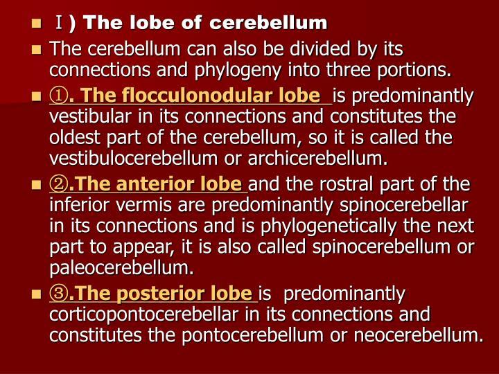 Ⅰ) The lobe of cerebellum