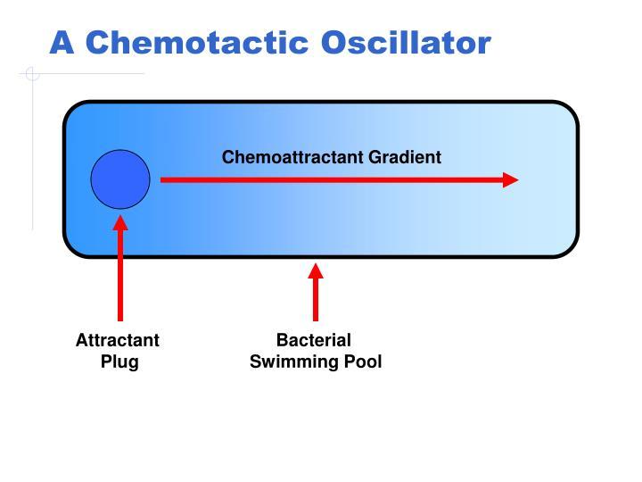 A chemotactic oscillator