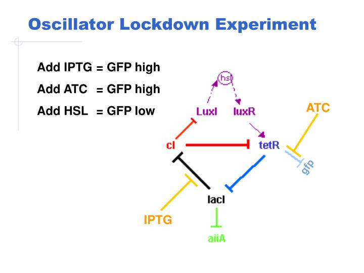 Oscillator Lockdown Experiment