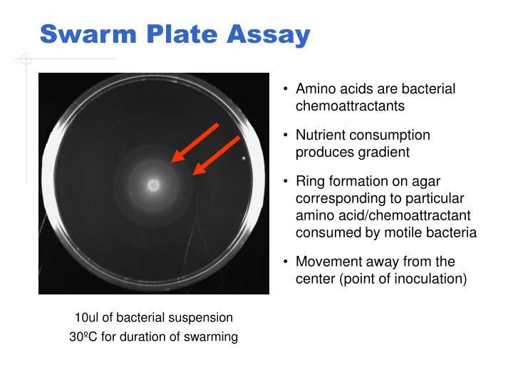 Swarm Plate Assay
