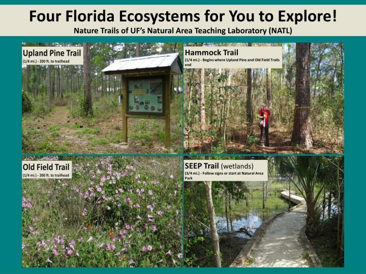 Four Florida Ecosystems for You to Explore!